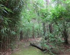 23-my-woods